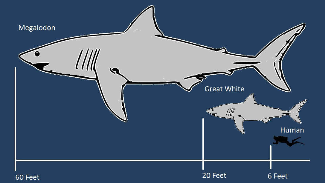 Pin Megalodon-shark-compared-to-great-white-page-2 on ...